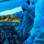 'No new cases of Avian flu in Vadodara'