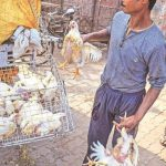 Bird flu scare keeps prices of chicken, eggs down; consumer confidence increases